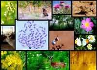 روزانه ۱۰۰ گونه تنوع زیستی در دنیا منقرض میشود/ ۵۶ درصد بحرین زیر آب میرود