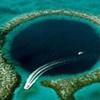 تصویری از ساکن عمیقترین گودال جهان