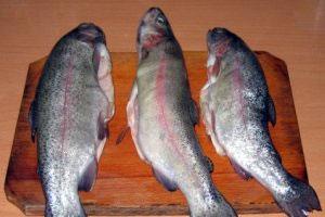 دانستنیهایی دربارهی ماهی