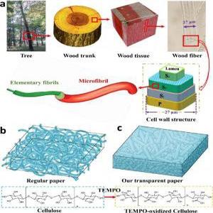 سلولهای خورشیدی چوبی!