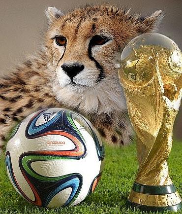 نجفی و سلطانیفر از پیراهن تیم ایران در جام جهانی رونمایی میکنند