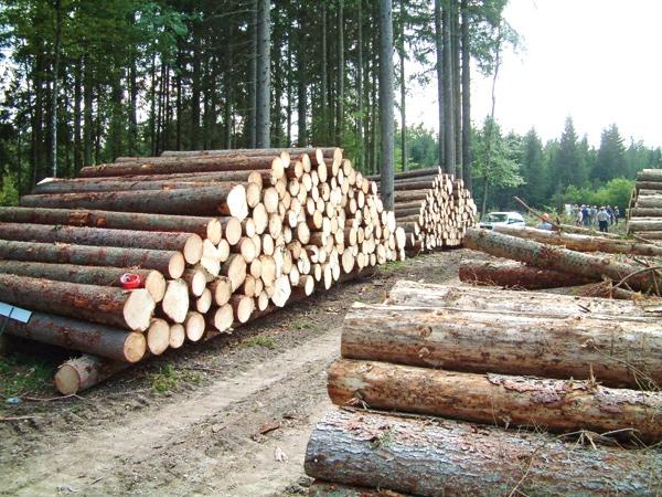 قطع میلیونها درخت برای تولید دستمال توالت