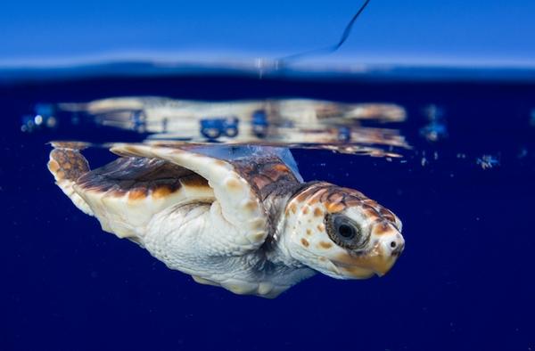 لاکپشتهای دریایی