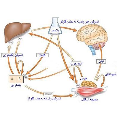 خطر ابتلا به سرطان پانکراس در افراد مبتلا به دیابت بیشتر است