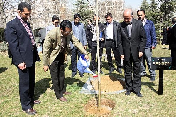 درخت همشهری در کنار تقدیر از مرد بوستانها