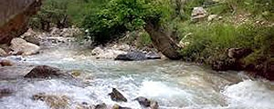 صدای رودخانه را به جان بسپار