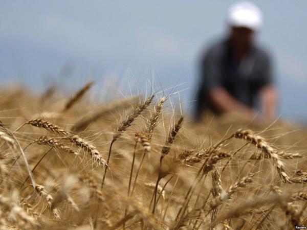 امنیت غذایی در ایران؛ از مرغهای سمی تا برنجهای آلوده