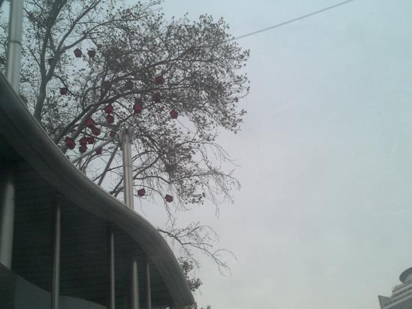 لانه پرندگان کجاست؟