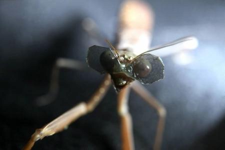 کوچکترین عینک سهبعدی جهان بر چشمان یک حشره
