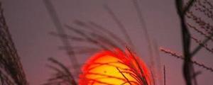 عکس روز / غروب آفتاب در سرزمین آفتاب