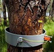 تولید آسان کاغذ با درختان تراریخته
