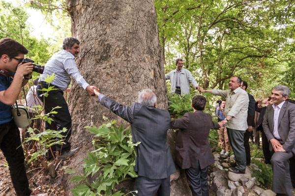 تأکید برحفظ درختان کهنسال و پل آجری کن