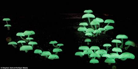 سرزمین جادویی قارچها