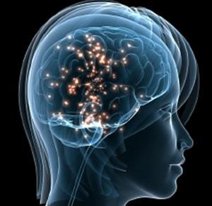 مغز انسان