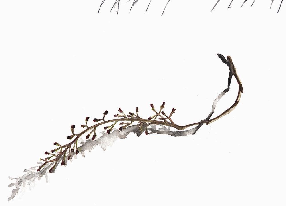 آبرنگهای فریدون آو در گالری دستان