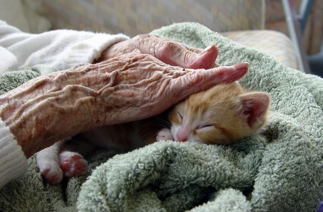 آشنایی با خطرات و ملاحظات نگهداری حیوانات خانگی