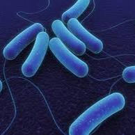 طلوع و غروب خورشید در زندگی باکتریها