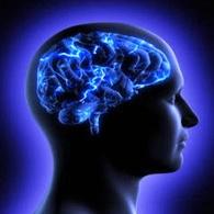مغز انسان به اندازه یک توپ تنیس کوچکتر شده است