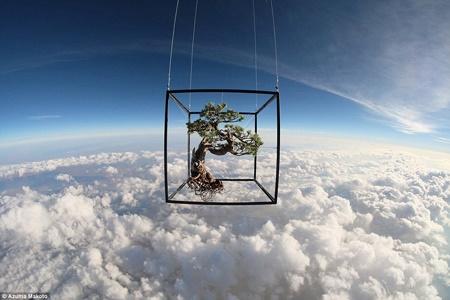 پرواز بنسای در فضا
