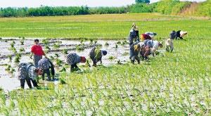 اختصاص ۱۸ میلیارد دلار به بخش کشاورزی