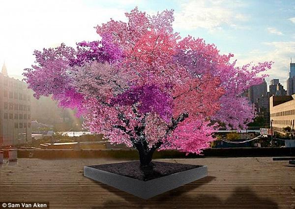 درخت ۴۰ میوه