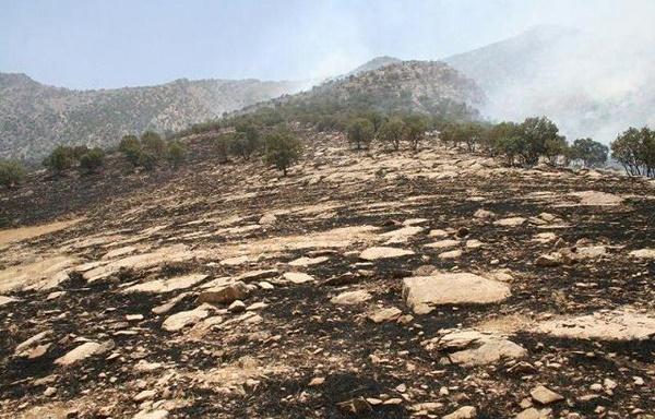 آتشی که به جان منطقه حفاظتشده افتاد؛ ۳۰ هکتار از سفیدکوه خاکستر شد