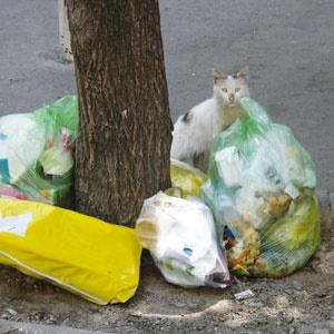 زبالههای ماشینسوار
