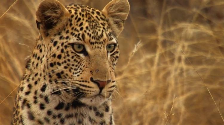 مجموعه تصاویر مستند آفریقا