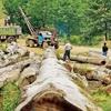 محدودیت بهرهبرداری از جنگلهای شمال بهمدت ۱۰سال