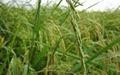 نرخ تسهیلات بخش کشاورزی به ۱۷ درصدکاهش یافت