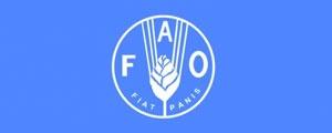گزارش سازمان ملل درباره بهای مواد خوراکی