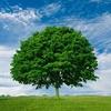 قطع ۲۷۰ اصله درخت در ۲ نقطه شهر از سوی سازمانهای دولتی