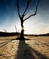 نزدیک به ۷۸ درصد دشتهای کشور رو به نابودی هستند