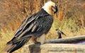 ۷۶گونه جانوری ایران در فهرست قرمز