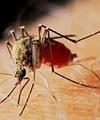 پیشبینی بیل گیتس: واکسن HIV تا سال ۲۰۳۰