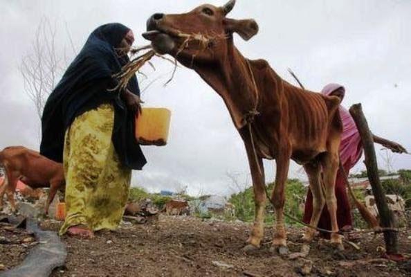 شاخ آفریقا خشک میشود