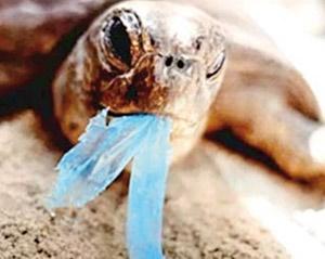 جریمه استفاده از کیسه پلاستیکی