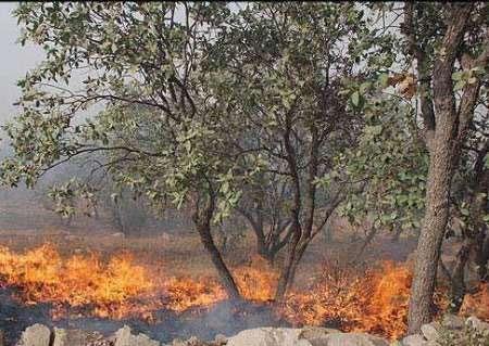 بیش از یک هزار هکتار از جنگلهای کهگیلویه و بویراحمد خاکستر شد