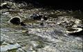 ۶۰ درصد آلودگیهای خشکی وارد دریاها میشود