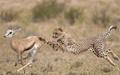 تاثیر انسانها و درندگان بر نابودی گونههای اکوسیستم جهانی