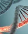 کشف ۲۳۸ ژن با قابلیت افزایش ۶۰ درصدی طول عمر