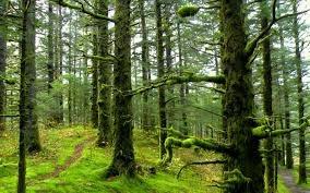 مساحت دقیق جنگلهای شمال ایران یک میلیون و ۹۶۷ هزار هکتار اعلام شد