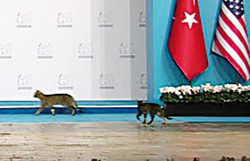 رژه گربهها در کنفرانس سران گروه ۲۰