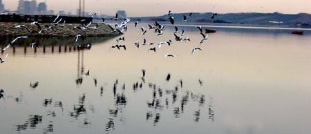 بازگشت مهاجران از سیبری به تهران | پرندهها به دریاچه خلیج فارس آمدند