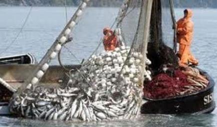 هشدار برای روند رو به رشد صید غیرمجاز آبزیان
