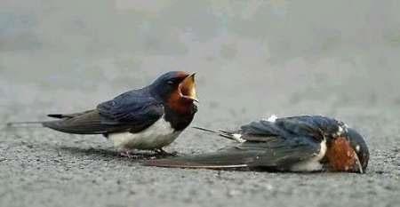 حال پرندگان ایرانی خوب نیست