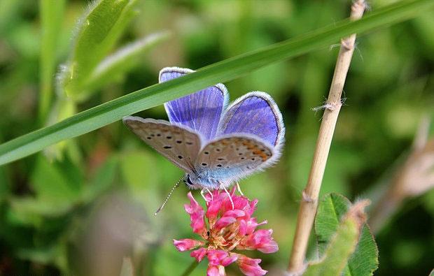 حیات کره زمین بدون حشرات نابود میشود
