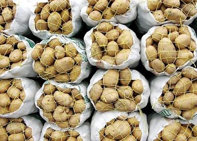 وعده وزیر جهادکشاورزی برای پیگیری مقصران امحای سیبزمینی