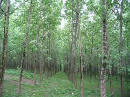 کمترین زمان برای خودترمیمی آثار سوختگی در جنگل ۲۰ سال است