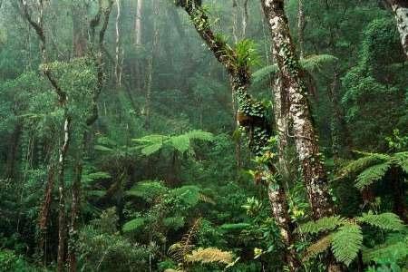 خطر انقراض نیمی از گونههای درختی آمازون